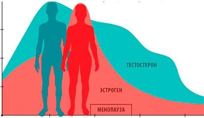 Разница между Андрогеном и Эстрогеном
