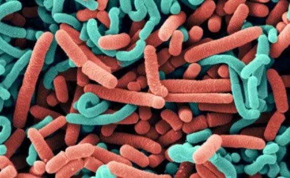 Разница между Лактобактериями и Бифидобактериями