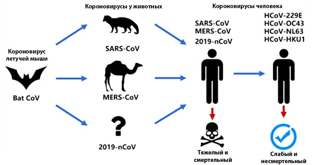 Виды коронавируса