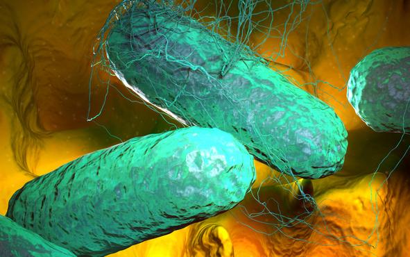 Бактерия Salmonella typhi, вызывающая Брюшной тиф