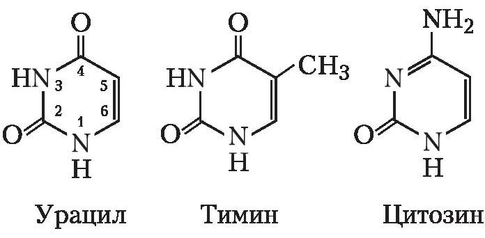 Пиримидиновые основания