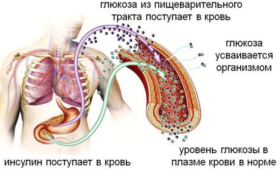 Принцип работы поджелудочной железы, являющейся частью Эндокринной системы