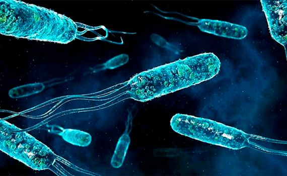 Разница между Бактериями и Цианобактериями