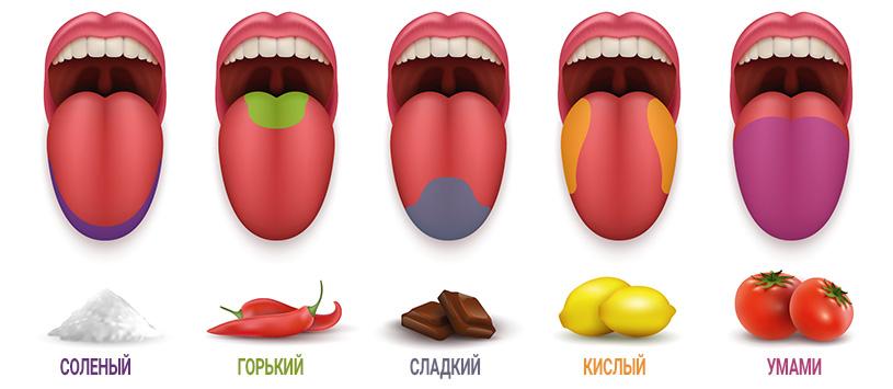 Вкусовые рецепторы языка