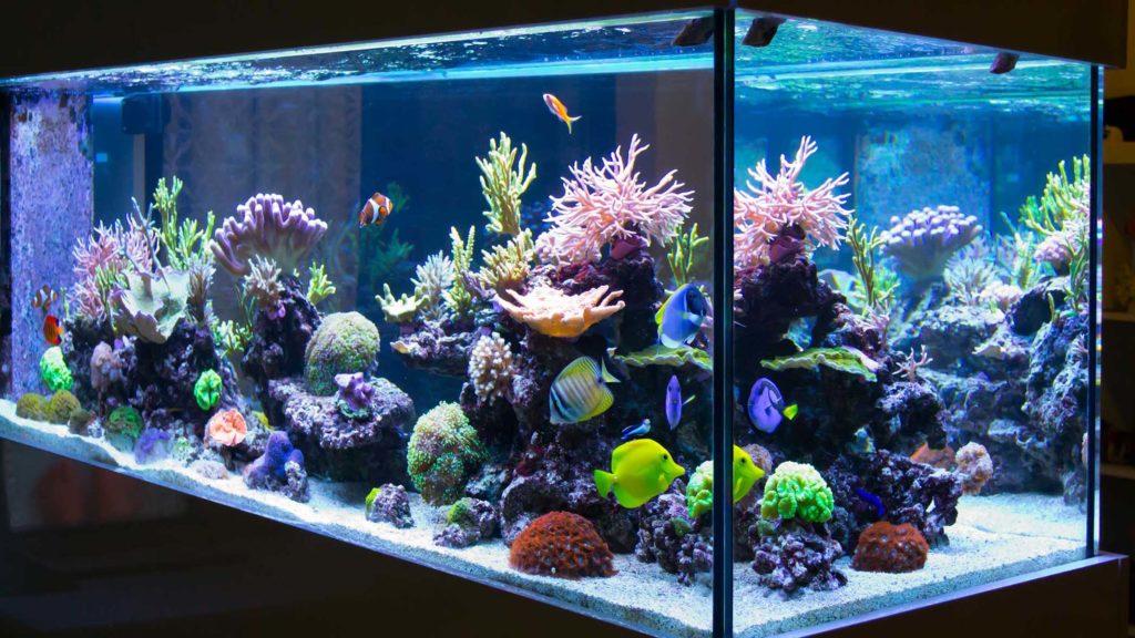 Бескаркасный аквариум