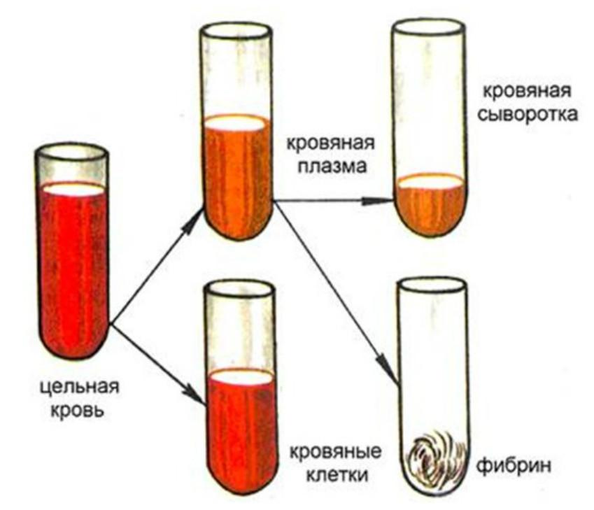 Получение кровяной сыворотки