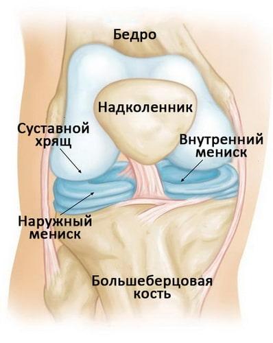 Мениски в коленном суставе
