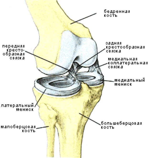 Разрыв мениска является наиболее частой причиной операции на колене