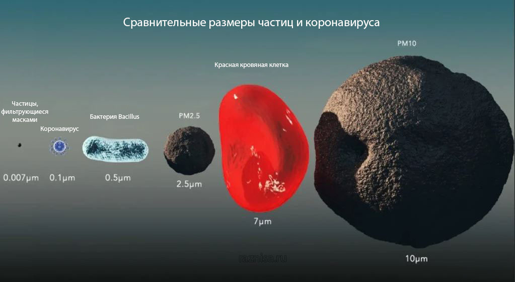 Сравнение размеров различных частиц и коронавируса