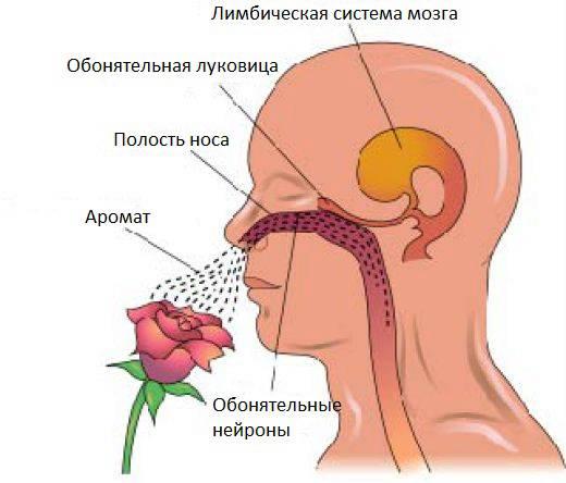 Аносмия - это потеря обоняния