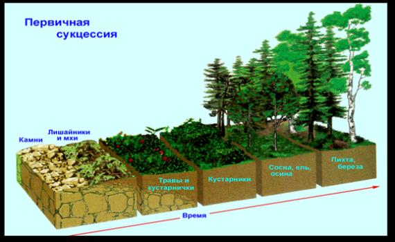Разница между Первичной и Вторичной экологической сукцессией