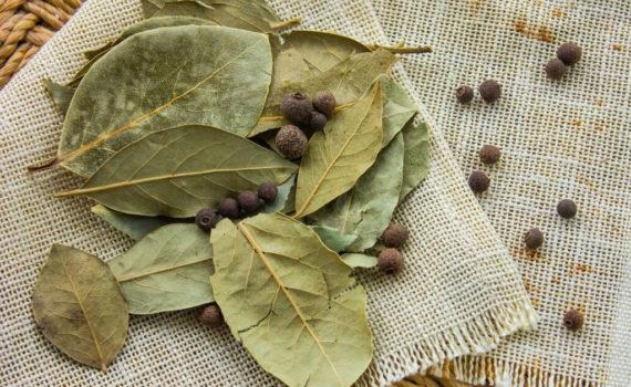Лавровый лист полезен для пищеварения, заживления ран и диабетиков