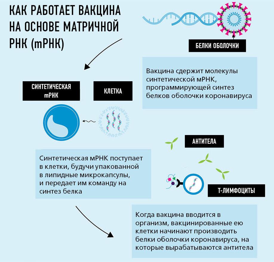 Принцип работы вакцины мРНК