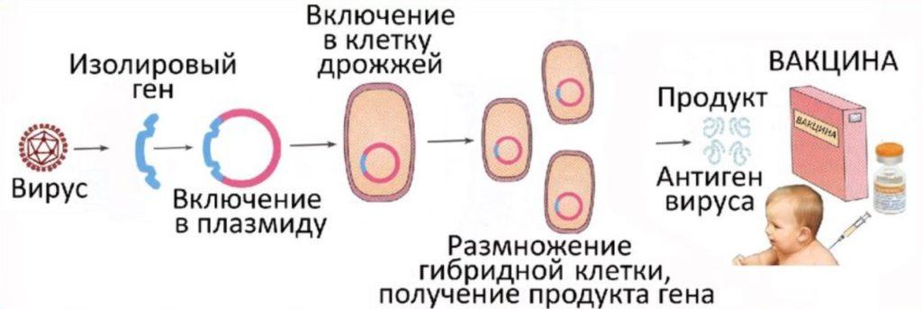 РНК-вакцина
