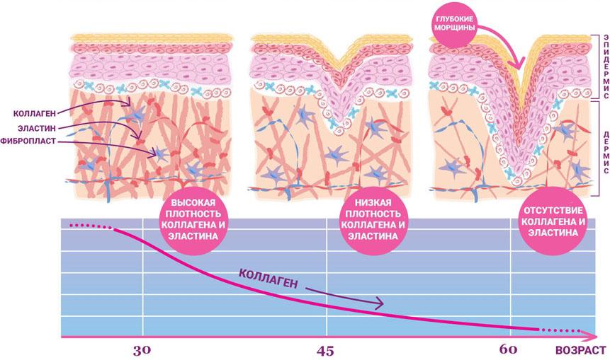 Связь количества Коллагена в коже с возрастом