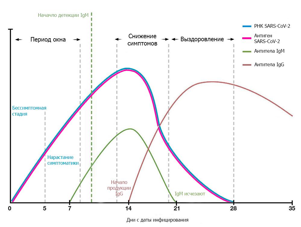 Выявление антигена и антител при коронавирусе