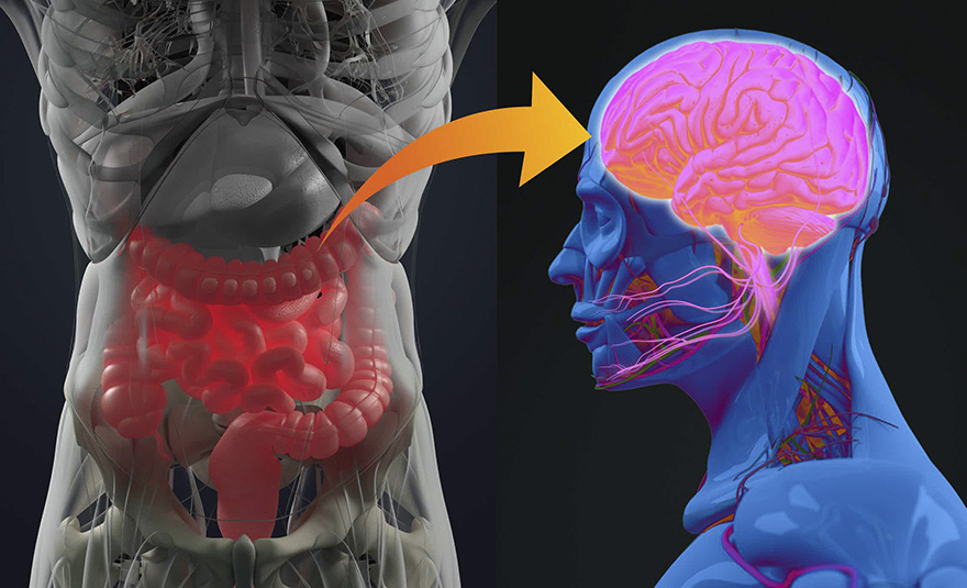 Связь кишечника и мозга