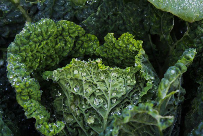 Темно-зеленые листовые овощи