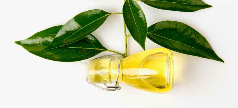 Камфорное масло используется как болеутоляющее, противокашлевое, антибактериальное и противогрибковое средство, а также как средство для лечения кожи