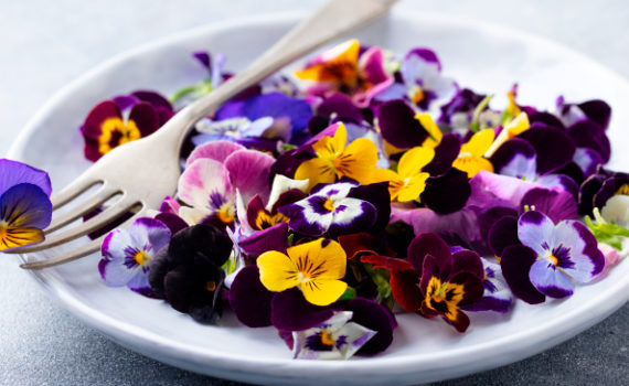 Съедобные цветы являются отличным источником питательных веществ, антиоксидантов и противовоспалительных соединений